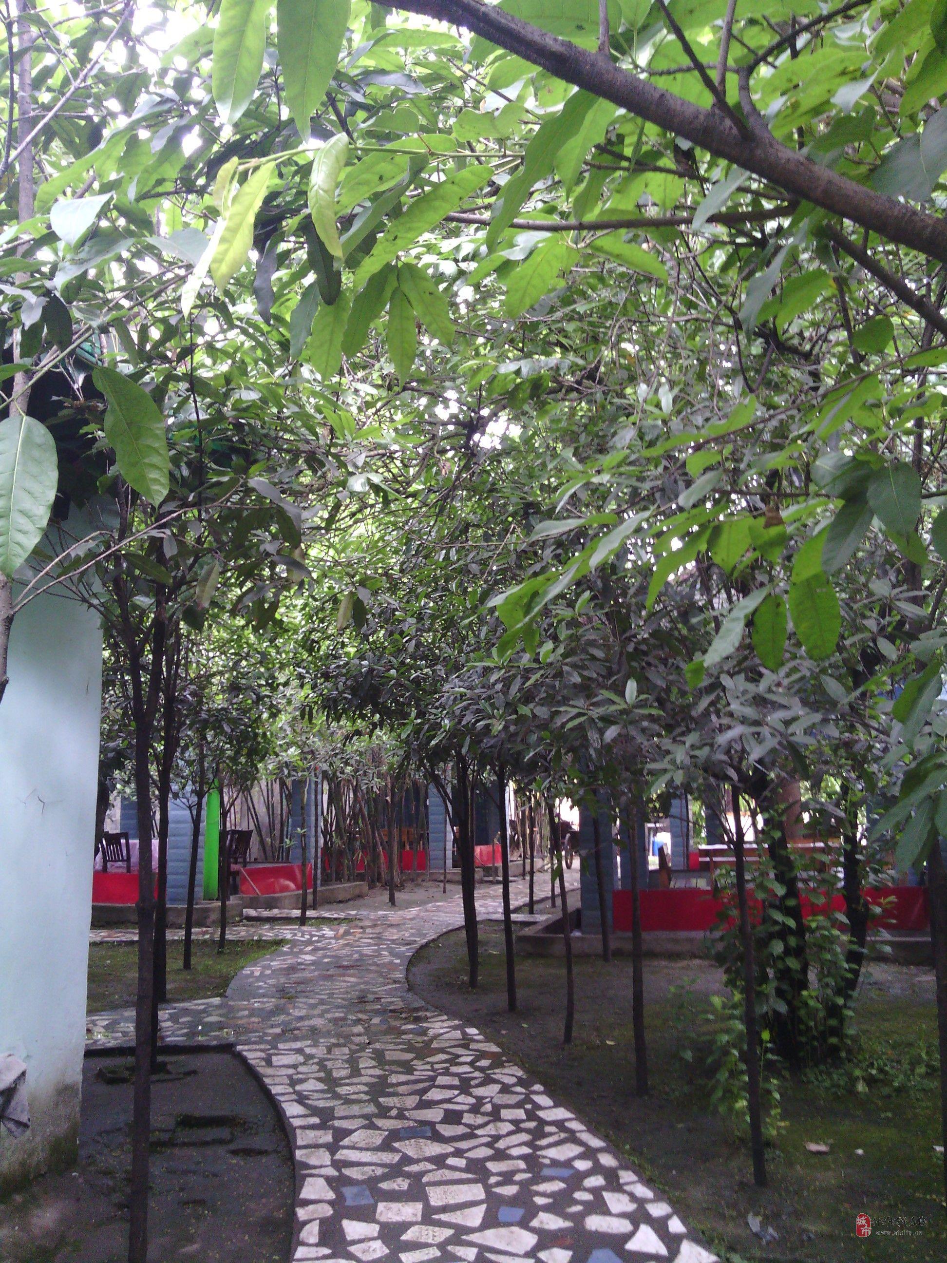 转让农家乐,环境优美,设施齐全,园内栽种果树.