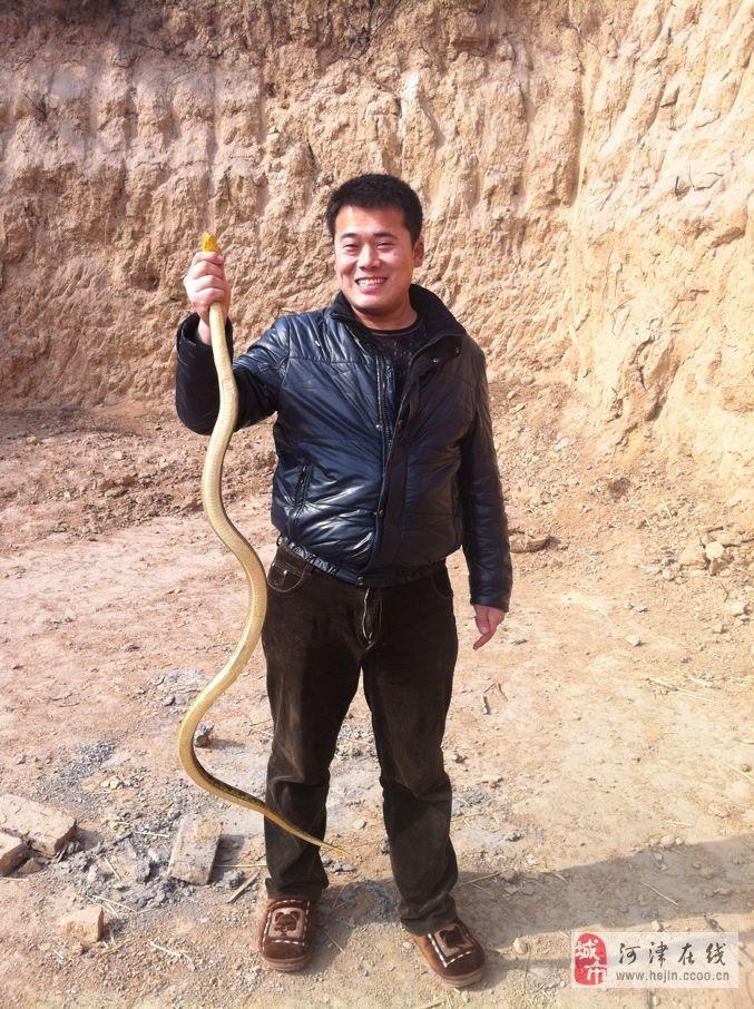 特種養殖蛇業培訓
