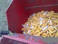 出售带剥皮的玉米收,3行的博远