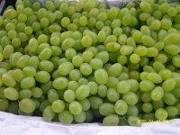 維多利亞葡萄