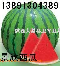 陜西西瓜價格陜西京新西瓜基地陜西京新西瓜種植基地