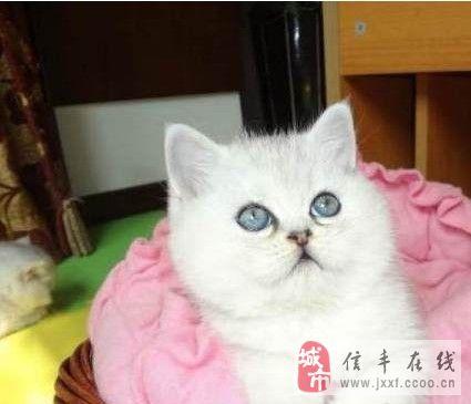 壁纸 动物 猫 猫咪 小猫 桌面 425_365