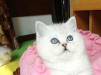 免费送加菲猫3个月的-888888元