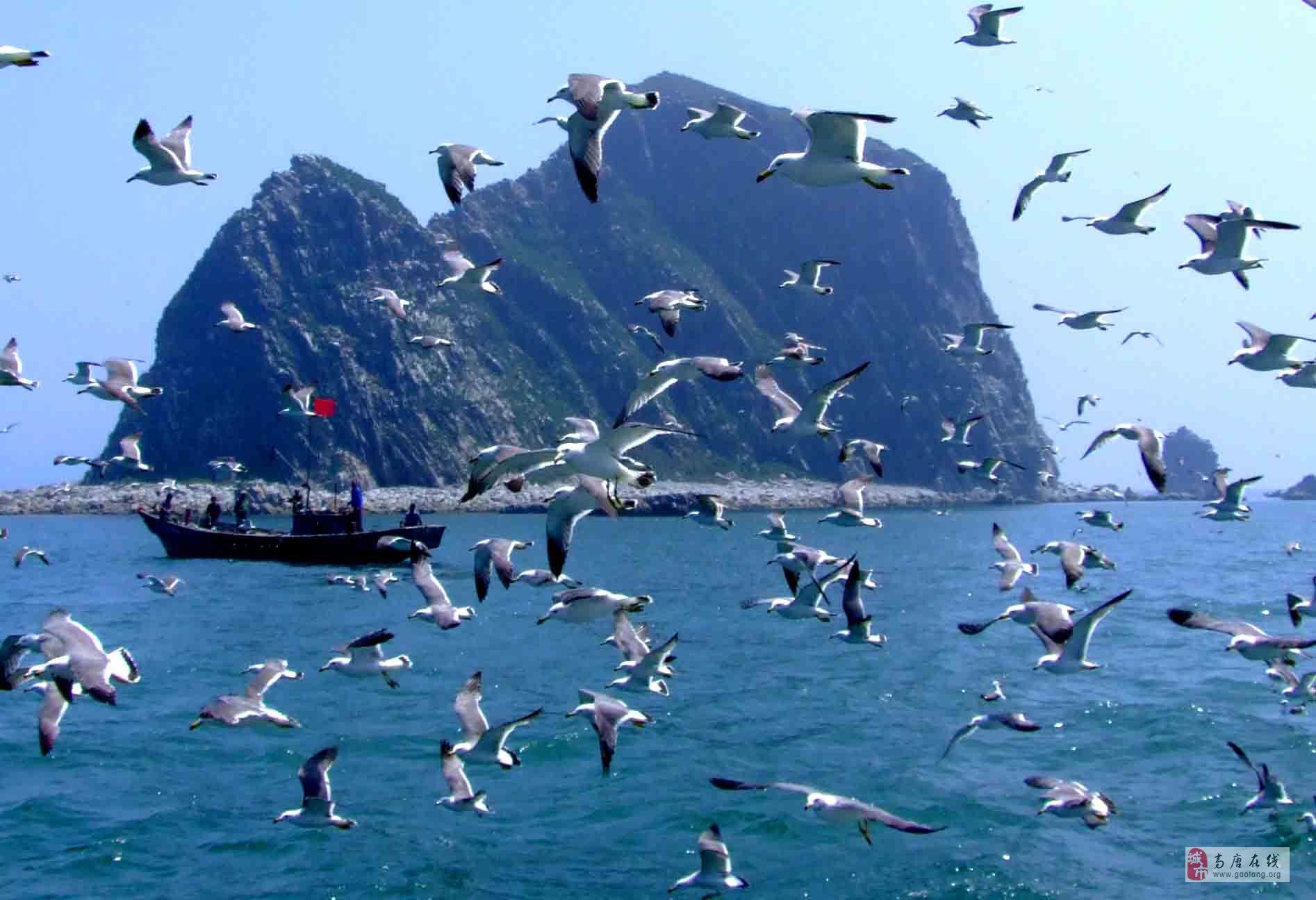 离我们最近的海鸟岛