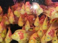 出售各種觀賞魚