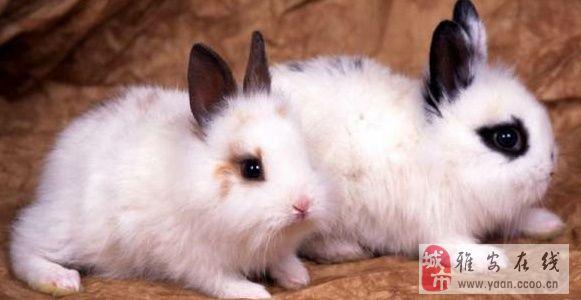 壁纸 动物 兔子 581_300