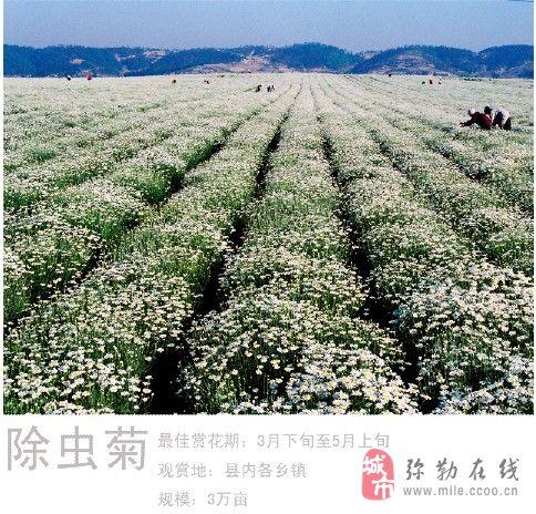 泸西县阿庐古洞风景区招聘导游