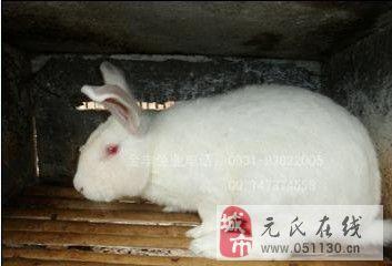 貴州獺兔養殖場肉兔養殖場