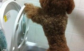 [贴图]这狗狗..简直是逆天的存在!!!
