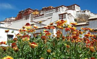 [西藏之旅] 梦回西藏