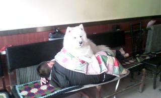[原创]世界上最幸福的狗。