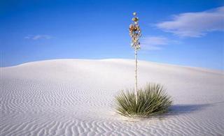 美奂绝伦的沙漠