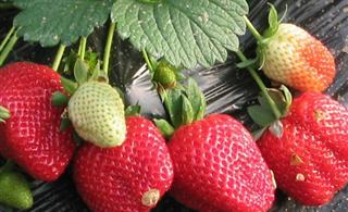 水果的正�_吃法