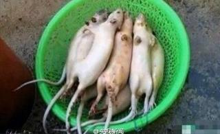 [分享]老鼠肉加入明胶等冒充羊肉售往上海江苏 63人被抓