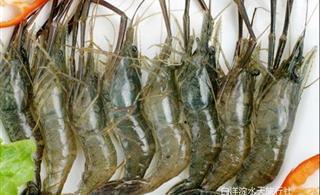 [原创]白洋淀民俗风情系列――白洋淀上美味的青虾