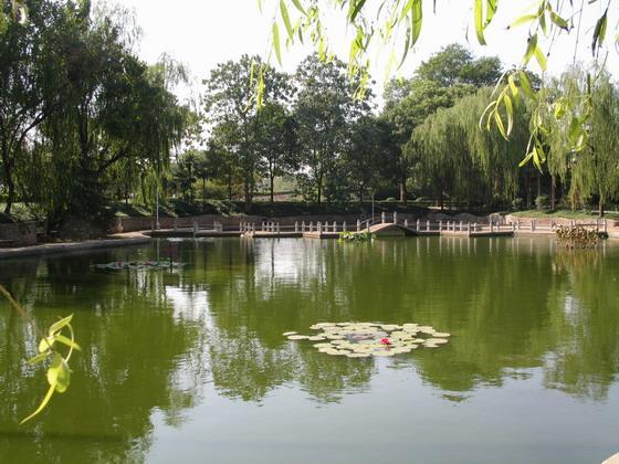 300亩人工湖免费垂钓
