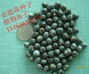串珠门帘珠子-植物珠子原料