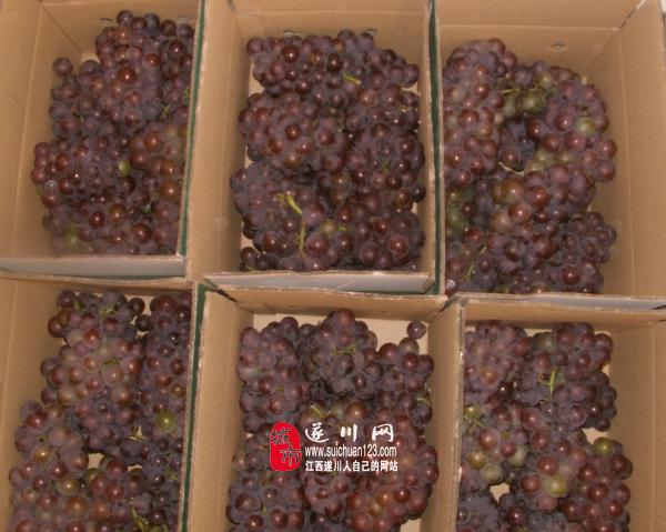 想吃新鮮葡萄的進來看下 絕對口感好無籽的