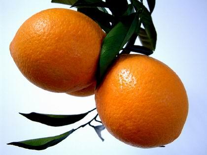 赣南特早.柑橘.柑橘.脐橙.代购