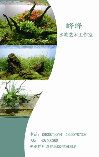 峰峰水族艺术工作室