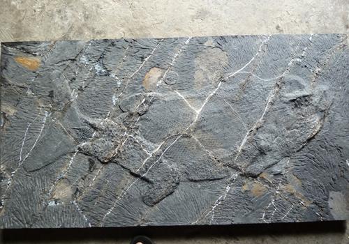 貴州關嶺古生物化石