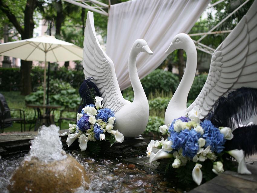 白天鹅之恋
