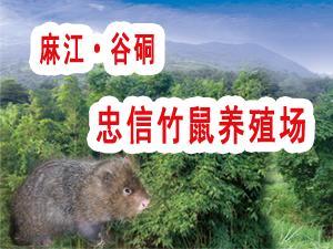 麻江县谷硐忠信竹鼠养殖场