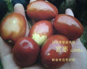 比冬棗好吃的棗果新品種《宮棗》