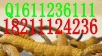我公司天天回收鄭州南陽信陽蟲草回收河南省蟲草