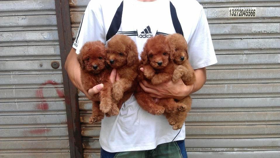 宁乡和鑫宠物会馆,常年出售各类世界名犬及护理产品