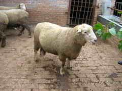 東豐縣綿羊山頭出售