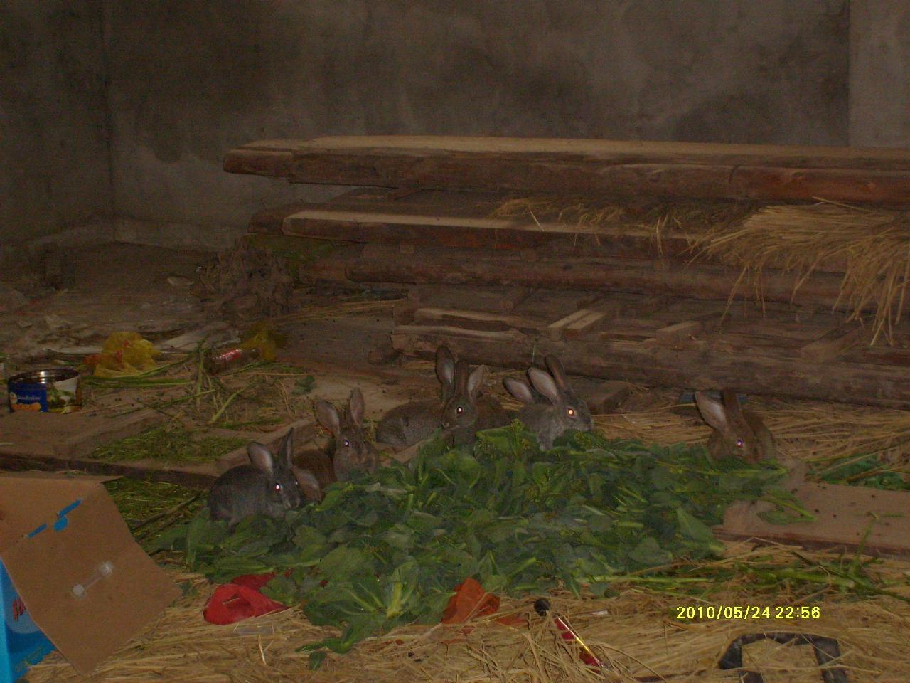 我有野兔出售,誰有興趣代理