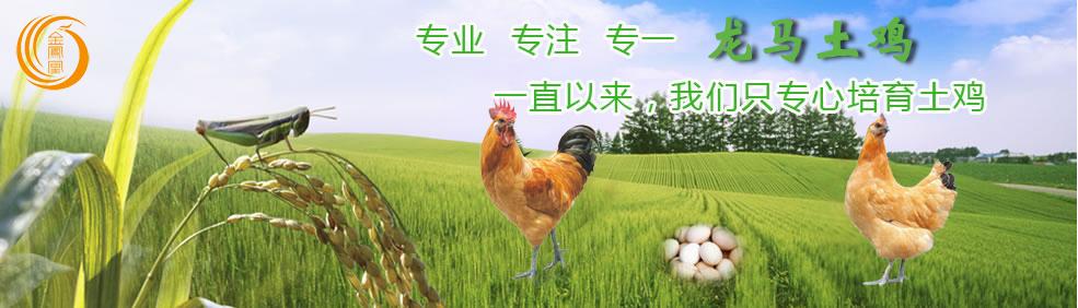 瀘州金鳳凰禽業提供優質龍馬土雞成雞、龍馬土雞雞苗