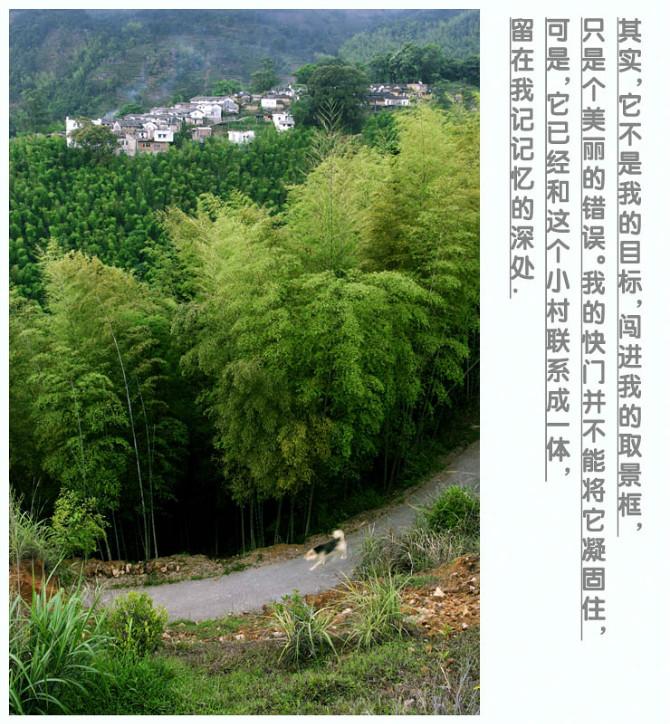 原始竹林,瀑布,森林,纯绿色美食,纯天然氧吧欢迎你
