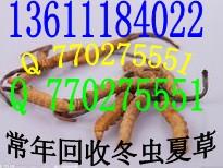 太原+大同+朔州高價回收蟲草上門回收山西省蟲草