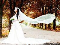 明星婚纱照