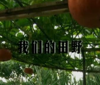 舌尖上的中国第七集――c07彩票免费注册的田野
