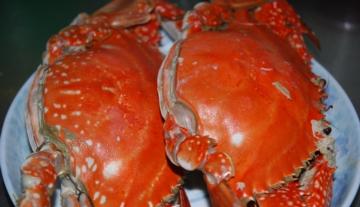 莱州梭子蟹