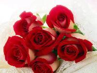 最能代表爱情的花朵