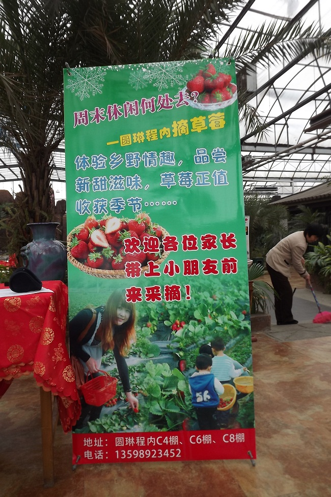 周末消费采摘草莓活动