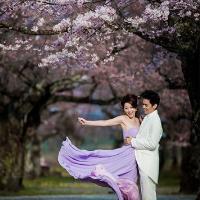 姚乐怡赴日本拍婚纱照 尽享樱花