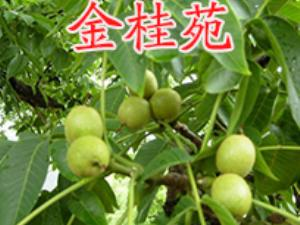 �M�h金桂苑苗木�N植合作社