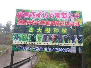 璧山县青杠肖明葡萄精品体验园