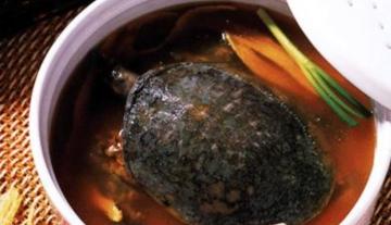 沁水甲鱼汤