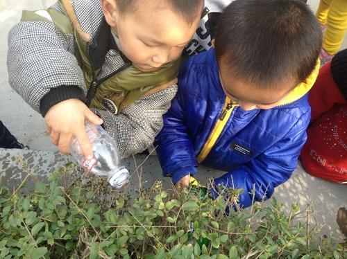 让幼儿对什么是植树节