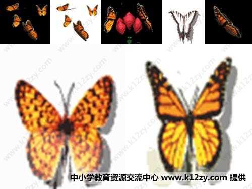 轴对称图形剪纸步骤蝴蝶