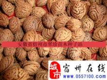 毛桃胡——安徽省宿州市翠珍苗木种子站