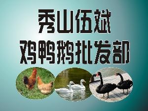 重庆秀山鸡鸭鹅苗批发部